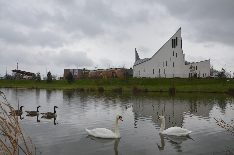 Cygnes non loin de l'église Saint-Pierre