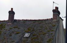 Mousse sur le toit du presbytère de Louvres